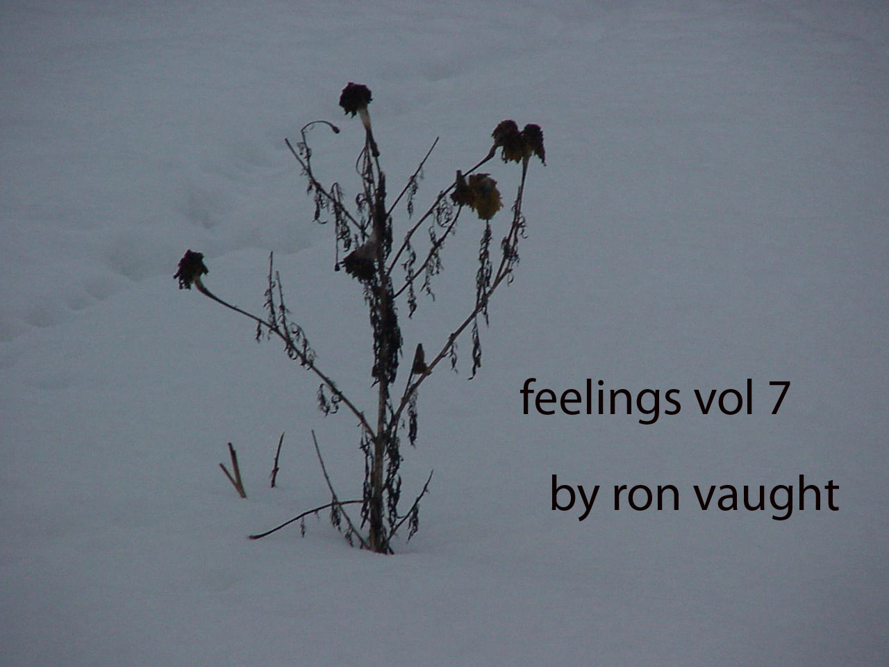 Feelings, vol 7